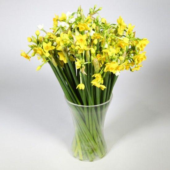 50 Narcissi Flowers