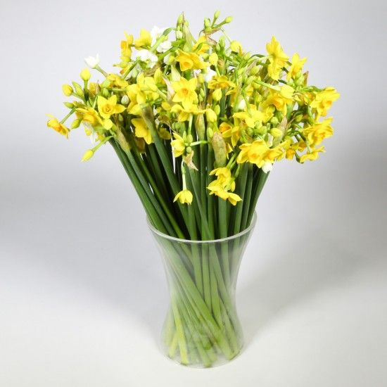 60 Narcissi Flowers
