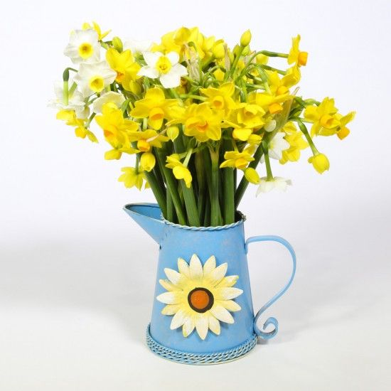30 Narcissi Flowers