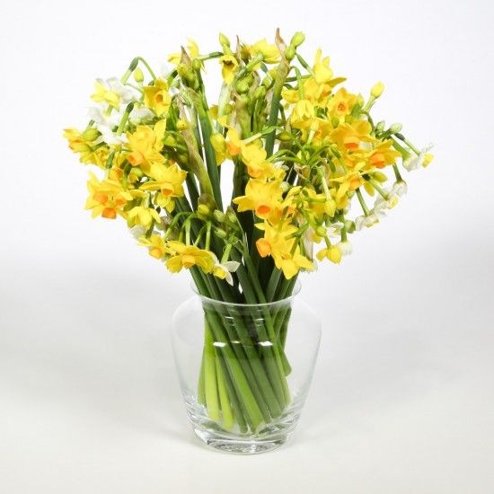 40 Narcissi Flowers for 3 Weeks