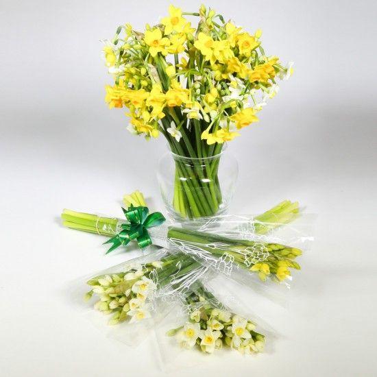 80 Narcissi Flowers
